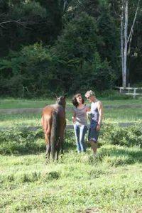 Personalised Training in Equine Massage