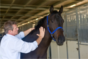 Friction Massage on Horse