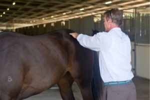 Horses Dorsal Sacral Nerve